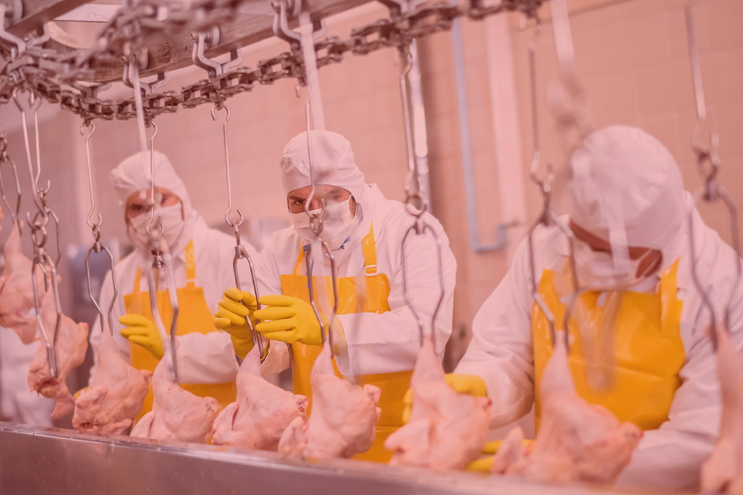 Return to Work Manufacturing and Food Processing